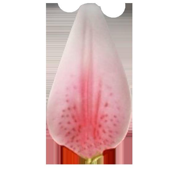petal1.png